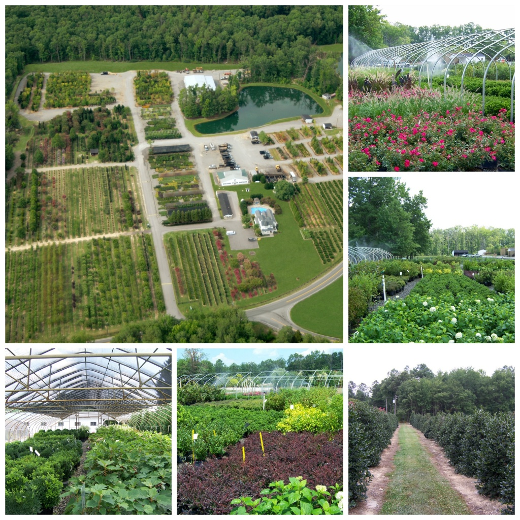 At James River Nurseries Our Philosophy Is Simple Provide Clients Quality Plant Material With Expert Installation A Fair Price